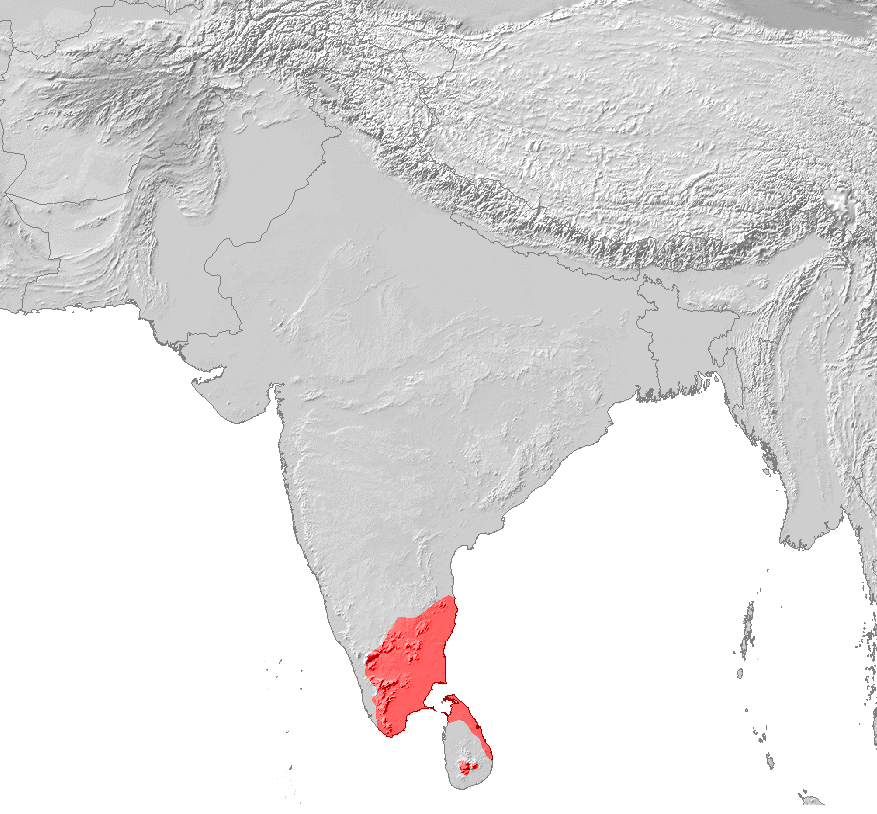 Learn about the Tamil Language